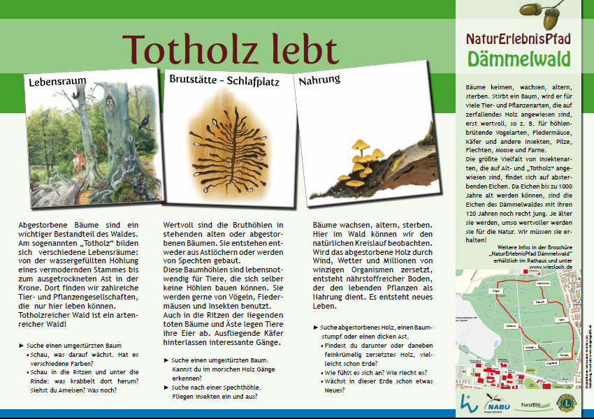 Schautafel über Den Lebensraum Totholz.