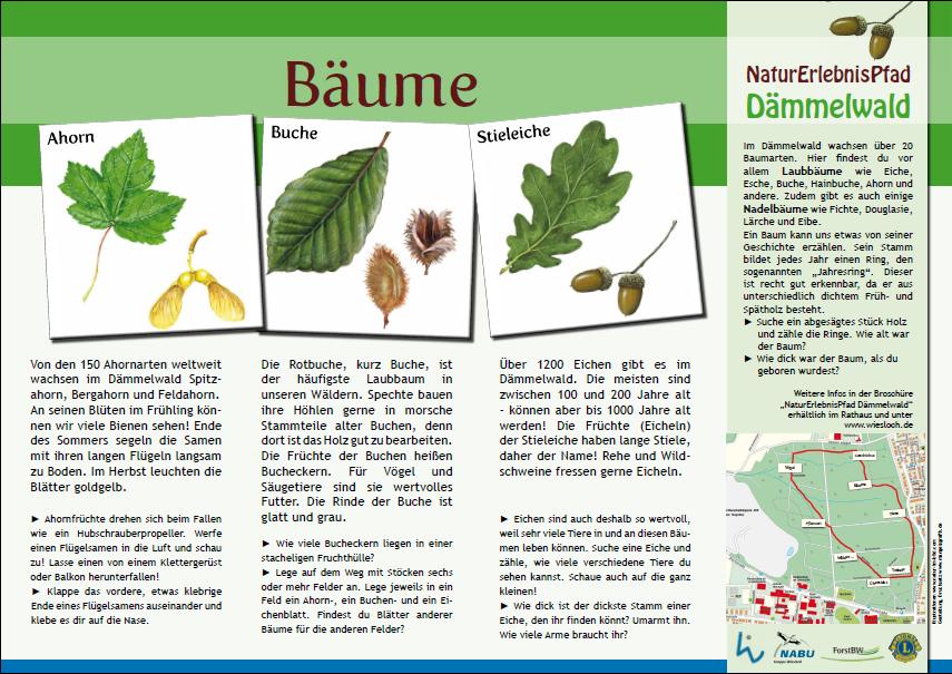 Baumarten kennenlernen